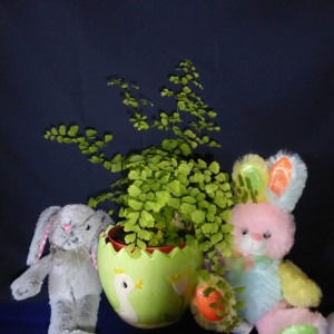 Little Bunnies - ready for baskets